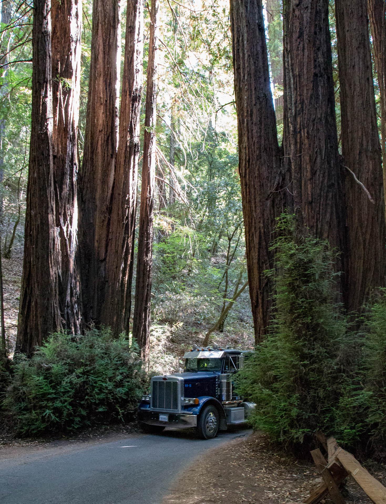 redwoodtruck